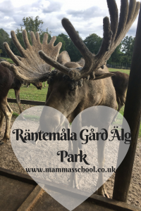 Räntemåla Gård Älg Park, Alg, elk, moose, sweden, www.mammasschool.co.uk