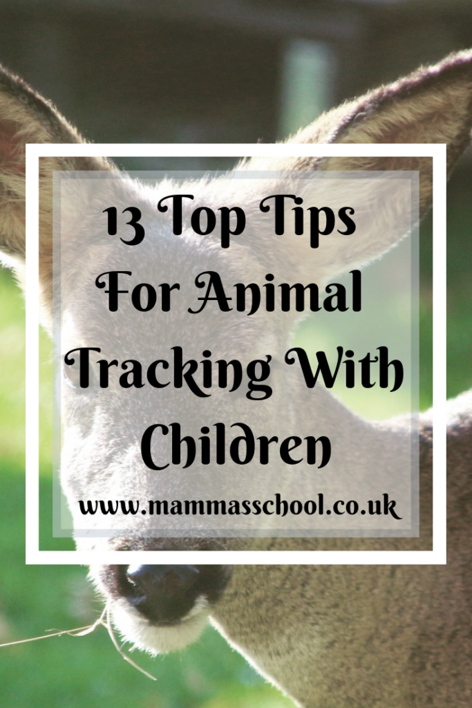 13 Top Tips For Animal Tracking with Children, animal tracking, bushcraft, nature play, nature based learning, outdoor fun, outdoor activities, www.mammasschool.co.uk