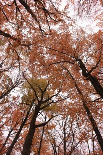 Autumn tree tops