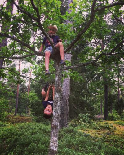 Boys hanging in tree