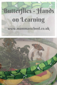Butterflies - hands on learning, caterpillars, cocoons, butterfly, insects, www.mammasschool.co.uk