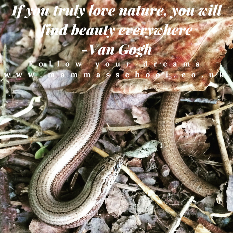 Inspiration Wednesday - Beautiful Nature, quotes, quote, nature quote, nature quotes, motivational quotes, inspirational quotes, www.mammasschool.co.uk