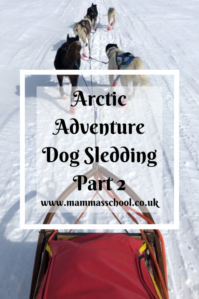 Arctic dog sledding adventure part 2, Arctic adventure, dog sledding, Norway, outdoor adventure, outdoor challenge, www.mammasschool.co.uk