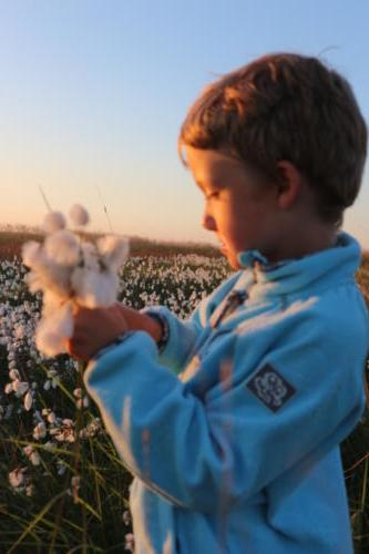 Boy and cotton flowers